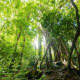 深い森の中で。