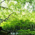 新・関西提携会場のお知らせ / 明治の森 箕面 音羽山荘